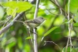 Jamaica - Birds