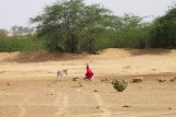 2014079083 Woman Thar Desert.JPG