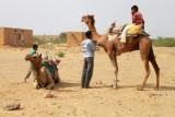 2014079108 Camel Thar Desert.JPG
