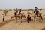 2014079135 Camel Thar Desert.JPG