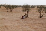 2014079150 Old Man Thar Desert.JPG