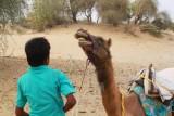 2014079156 Camel Thar Desert.JPG