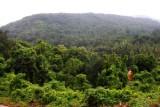 2014079816 Rainforests near Ponda Goa.JPG