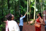2014079839 Tropical spice plantation Keri.JPG