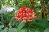 2014079846 Spice plantation Keri.JPG