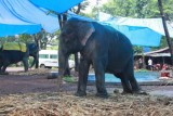 2014079870 Elephant Spice Plantation Goa.JPG