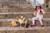 2016033374 Cats Girl Cusco.jpg
