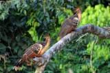 2016034029 Asthmatic birds Lake Sandoval.jpg