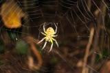 2016034076 Yellow Spider Lake Sandoval.jpg