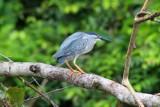 2016034159 Small Bird Lake Sandoval.jpg