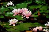 bloemen_2014