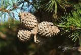 13  Pine Comb Big Meadows  08-24-2013.jpg