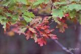 1619  Nature Big Meadows 09-22-13.jpg