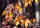 793  Huntley Meadows Fall 10-30-14.jpg
