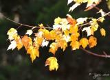 91  Fall Dyke Marsh 10-31-14.jpg