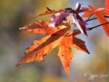 87 Fall Dyke Marsh 10-31-14.jpg