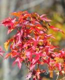 44  Scenery Fall  Huntley Meadows 11-13-14.jpg