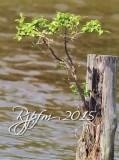691 Nature Leesylvania 05-20-2015.jpg