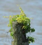 692  Nature Leesylvania 05-20-2015.jpg