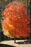 861  Nature Leesylvania  11-03-15.jpg
