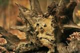 1243  Nature hold tree sad face Mason Neck 11-16-15.jpg