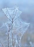 921   Nature  Foggy  Frosty  Huntley Meadows 12-05-15.jpg