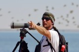 Bird count in the Banc d'Arguin, January 2017
