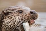 Otter / Utter