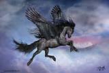 Pegasus7s.jpg