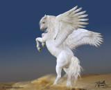 whitepegasuss.jpg
