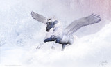 SnowPegasus2-s.jpg