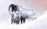 foalsnow2-s.jpg