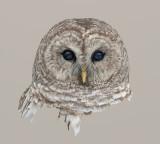 owlpainting1.jpg
