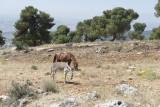 Jordan Jerash 2013 0918.jpg