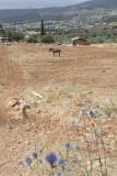 Jordan Jerash 2013 0919.jpg