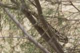 Jordan Petra 2013 2159 Wadi Muthlim.jpg