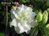 e14 'Rebecca Taffet'