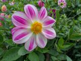 08_2014_In the Garden 1173.jpg