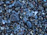 09_2015_glass beach 0823.jpg
