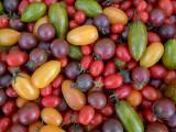 Varied Tomatos