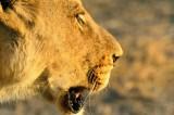 MBO_6869 Simba
