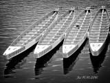 Dragon Boats in B&W