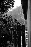 Colorless Rain