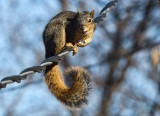 Squirrel On Wire