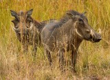 The Warthogs