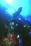 Diving the Yolanda wreck Ras Mohamed