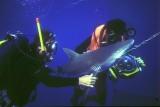 Shark Story NatGeo with David Doubilet
