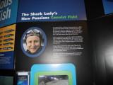 The Shark Lady
