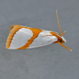 Pyraloidea (5339 - 6088)