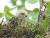 Chick, May 9, 2009
